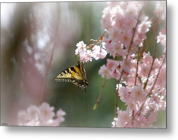Butterfly With Misty Pink Metal Print by Molly Dean