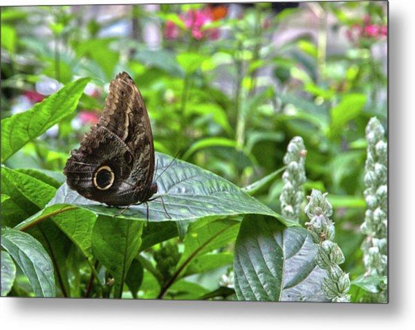 Butterfly5 Metal Print