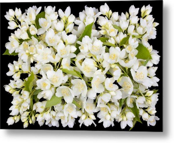 Buttonhole From White  Jasmine Flowers Metal Print by Aleksandr Volkov