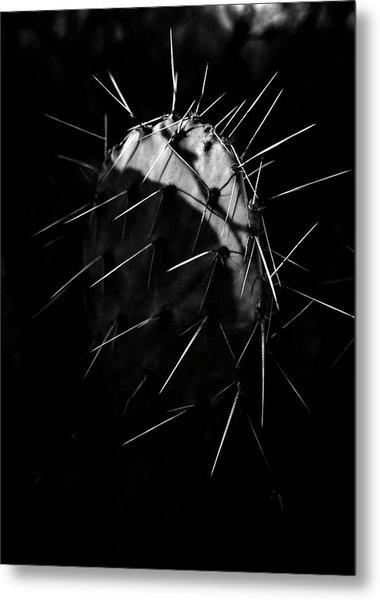 Bw Cactus Thorns Metal Print