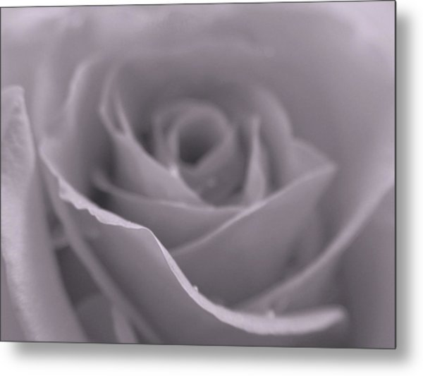 Bw Rose  Metal Print by Juergen Roth