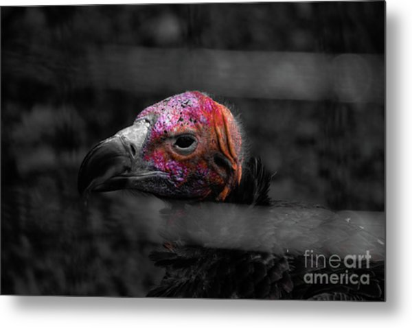 Bw Vulture - Wildlife Metal Print