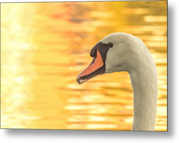 By Dawn's Light Metal Print