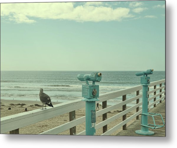 Ca Peepers Metal Print by JAMART Photography