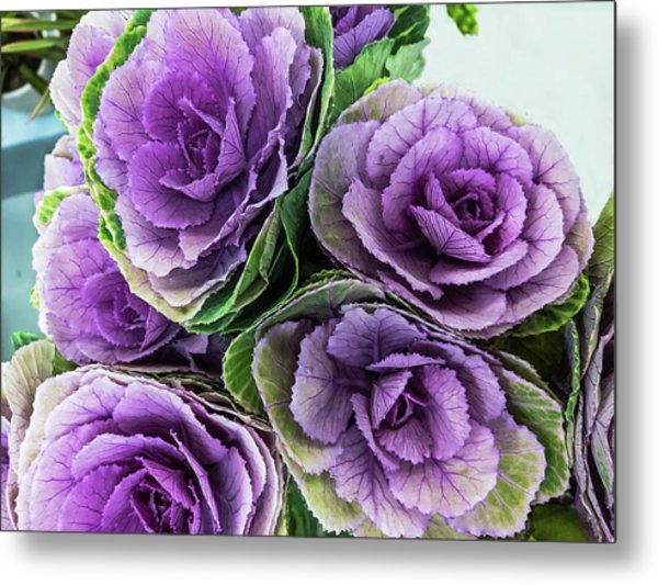 Cabbage Flower Metal Print