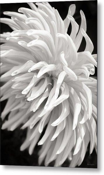 Cactus Dahlia Metal Print