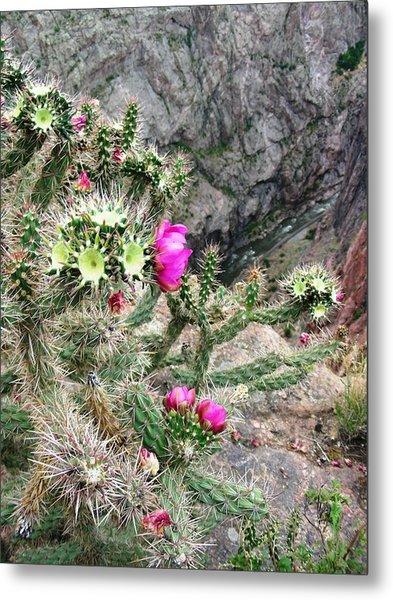 Cactus Gorge Metal Print by Peter  McIntosh