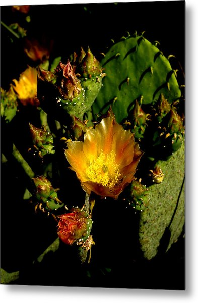 Cactus In Sunset Light Metal Print by James Granberry
