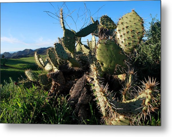 Cactus In The Mountains Metal Print
