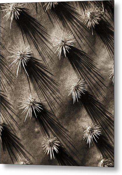 Cactus Shadows Metal Print by Bob Coates