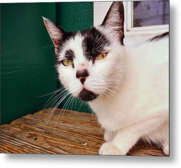 Cafe Cat  Metal Print by JAMART Photography