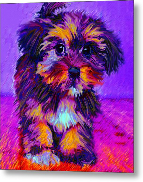 Calico Dog Metal Print
