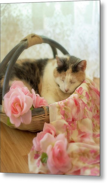 Calico Kitty In A Basket With Pink Roses Metal Print