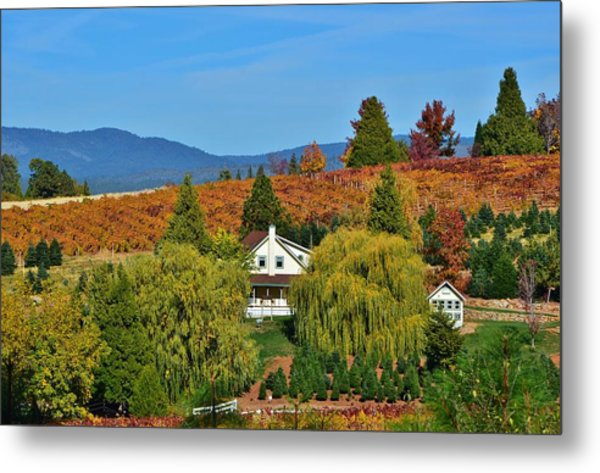 California Apple Hill Metal Print