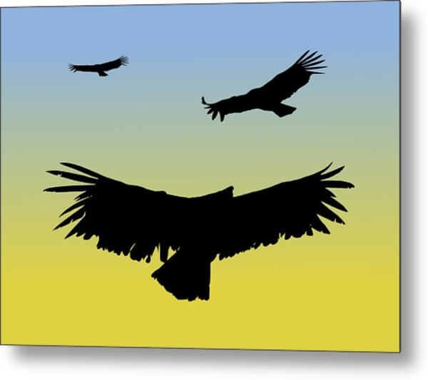 California Condors In Flight Silhouette At Sunrise Metal Print