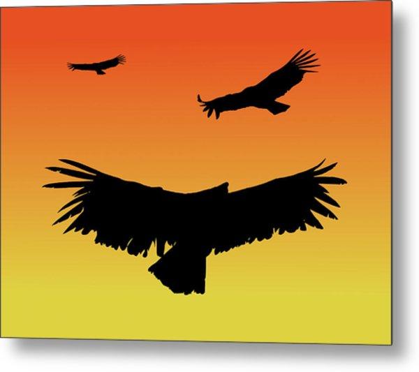 California Condors In Flight Silhouette At Sunset Metal Print