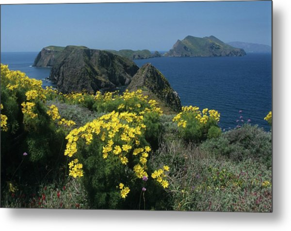 California Island Sunshine Metal Print