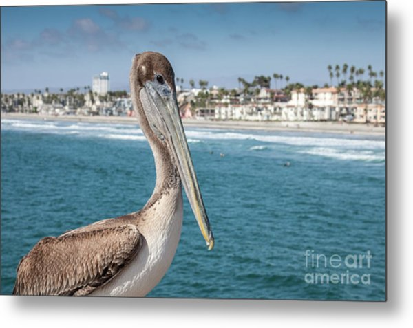 California Pelican Metal Print