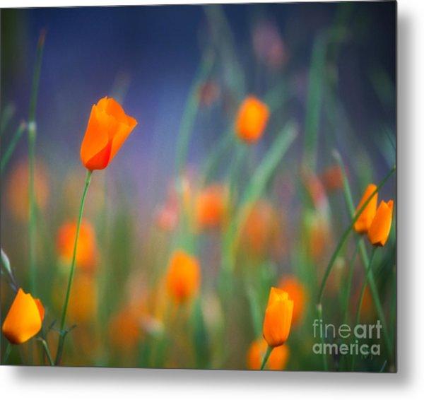 California Poppies 2 Metal Print