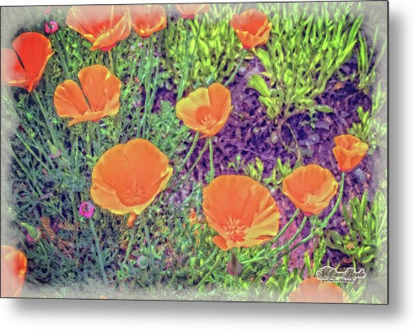 Metal Print featuring the photograph California Poppys Too by William Havle