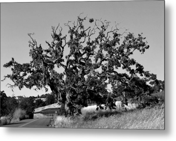 California Roadside Tree - Black And White Metal Print