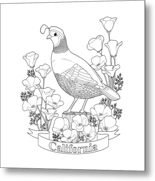 - California State Bird And Flower Coloring Page Metal Print By Crista Forest