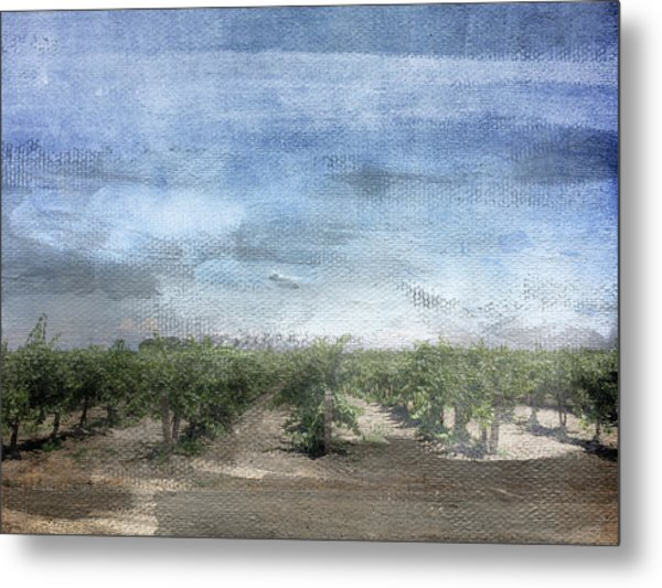 California Vineyard- Art By Linda Woods Metal Print