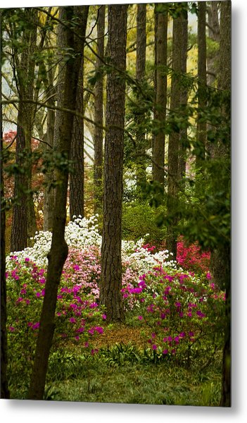 Callaway Gardens Spring Azaleas Metal Print