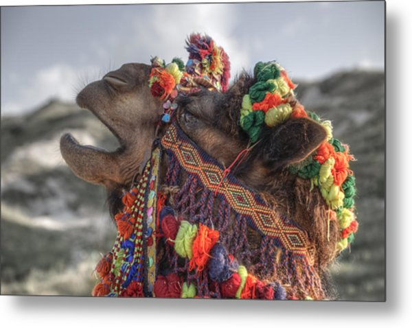 Camel Metal Print