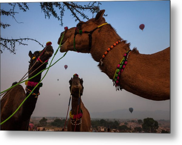 Camels And Balloons Metal Print