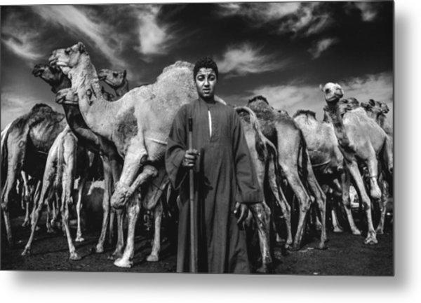 Camels Gaurdian Metal Print