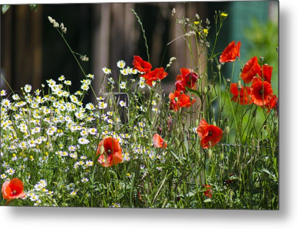 Camille And Poppies Metal Print