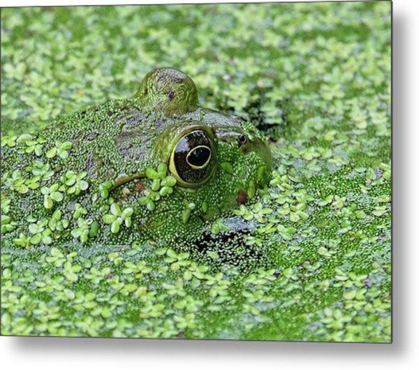 Camo Frog Metal Print