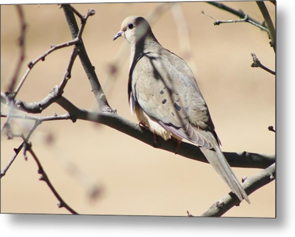 Camouflaged Mourning Dove Metal Print