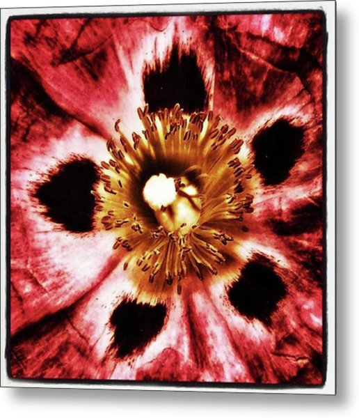 Metal Print featuring the photograph Can You Guess What Flower? Hints: It's by Mr Photojimsf