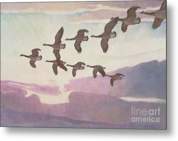 Canada Geese In Spring Metal Print