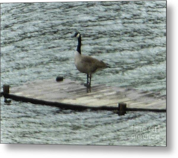 Canada Goose Lake Dock Metal Print