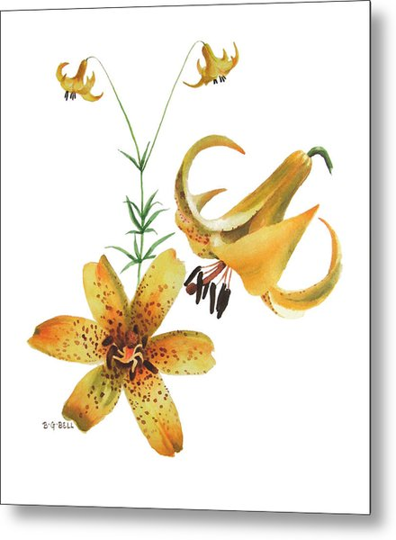 Canada Lily Composition Metal Print