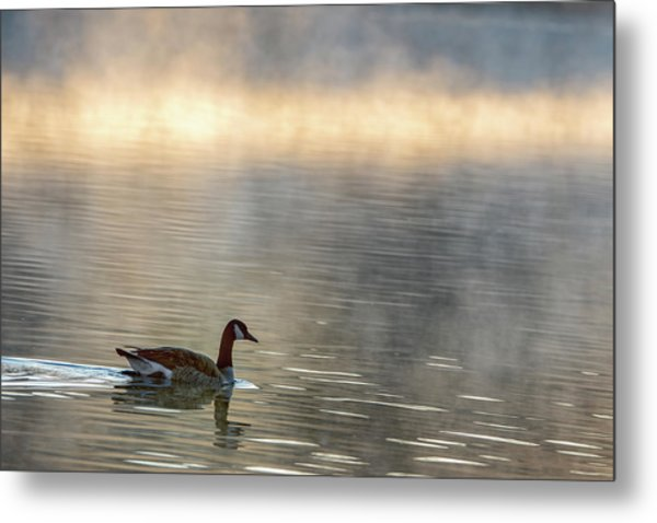 Metal Print featuring the photograph Canadian Goose In Misty Lake by Philip Rodgers