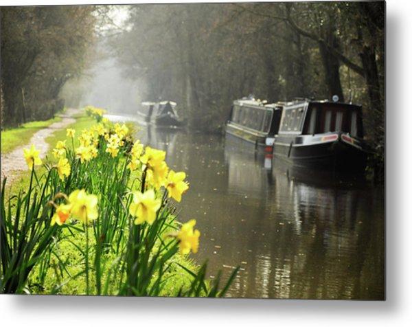 Canalside Daffodils Metal Print