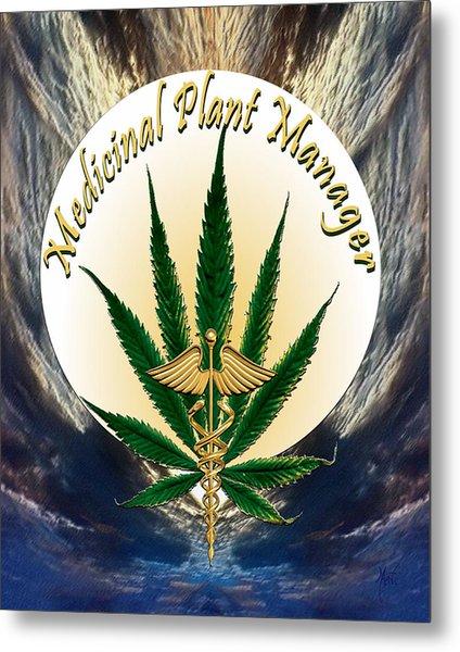 Cannabis Medicinal Plant Metal Print