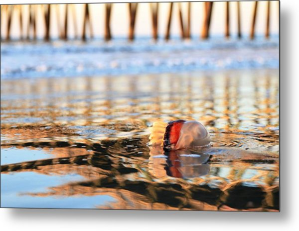 Cannonball Jellyfish Beached Metal Print