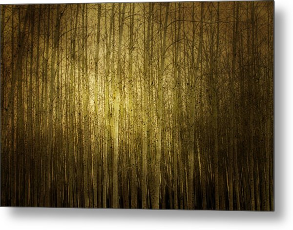 Can't See The Forest For The Trees Metal Print