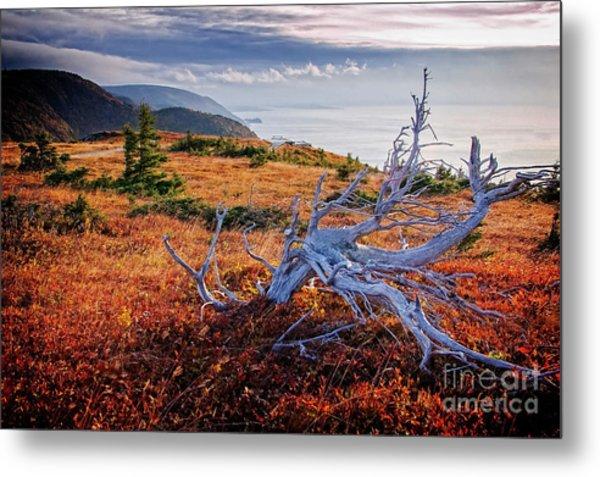 Cape Breton Highlands Metal Print
