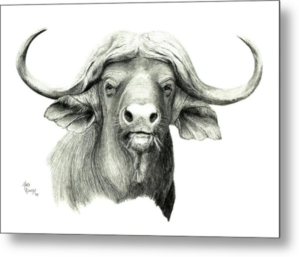 Cape Buffalo Metal Print by Mary Rogers