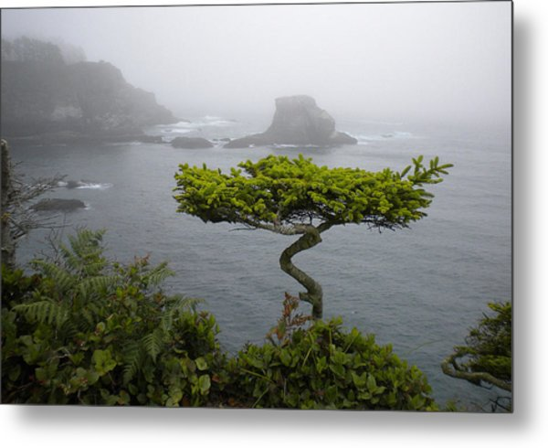 Cape Flattery Noble Metal Print