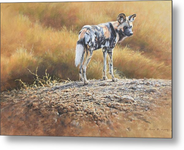 Cape Hunting Dog Metal Print