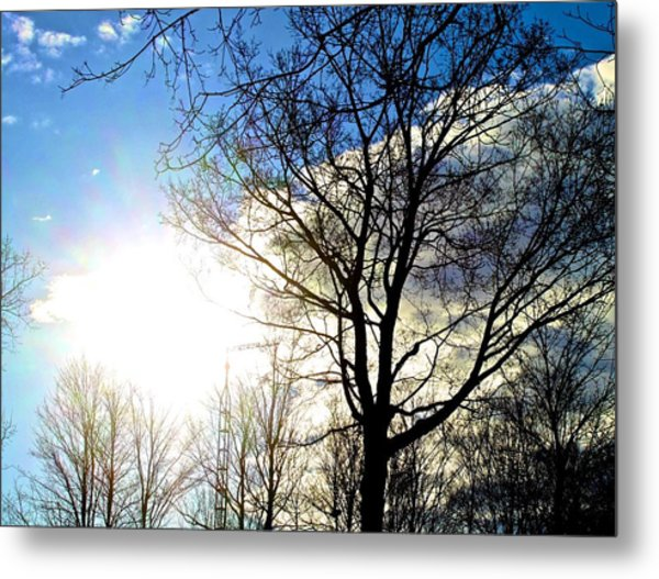 Capturing The Morning Sun Metal Print