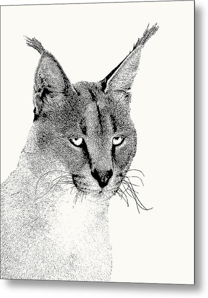 Caracal Wild Cat Portrait Metal Print