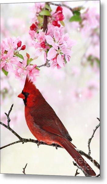 Cardinal Amid Spring Tree Blossoms Metal Print
